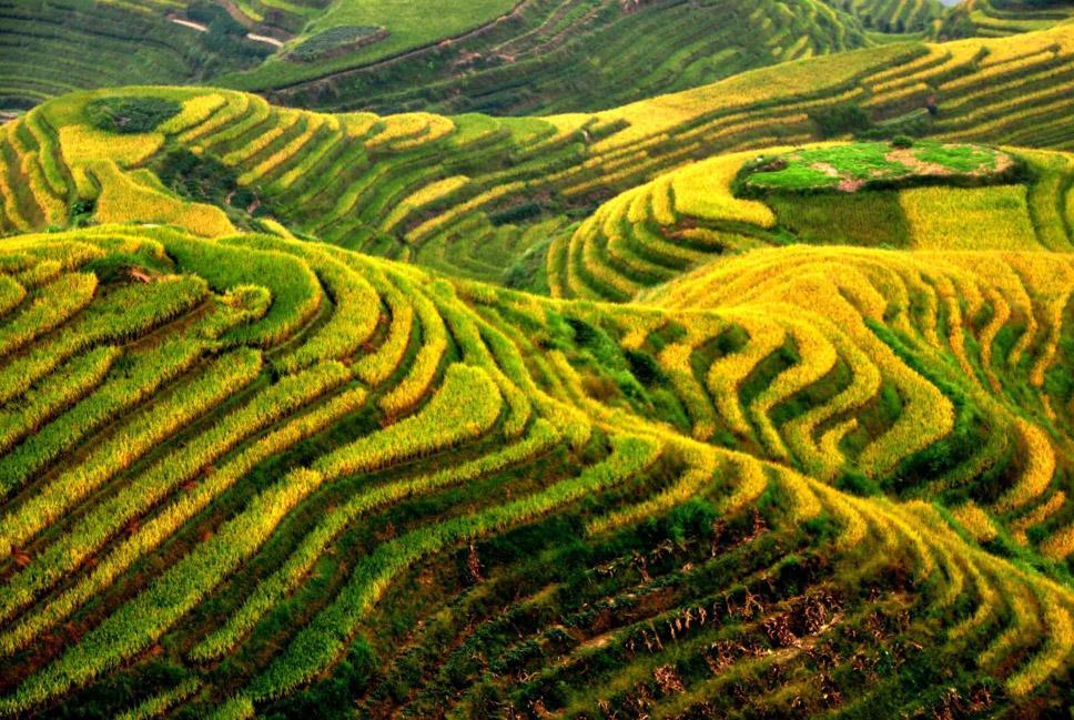 Guilin-Rice-Terraces,-Longji,-China