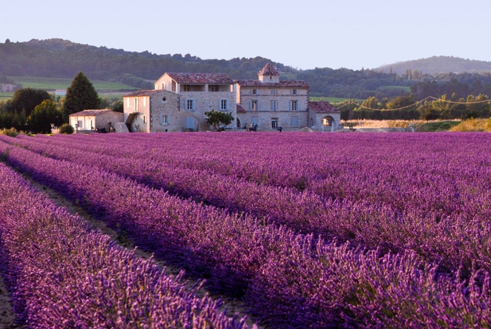 Lavender-fields,-Provence,-France