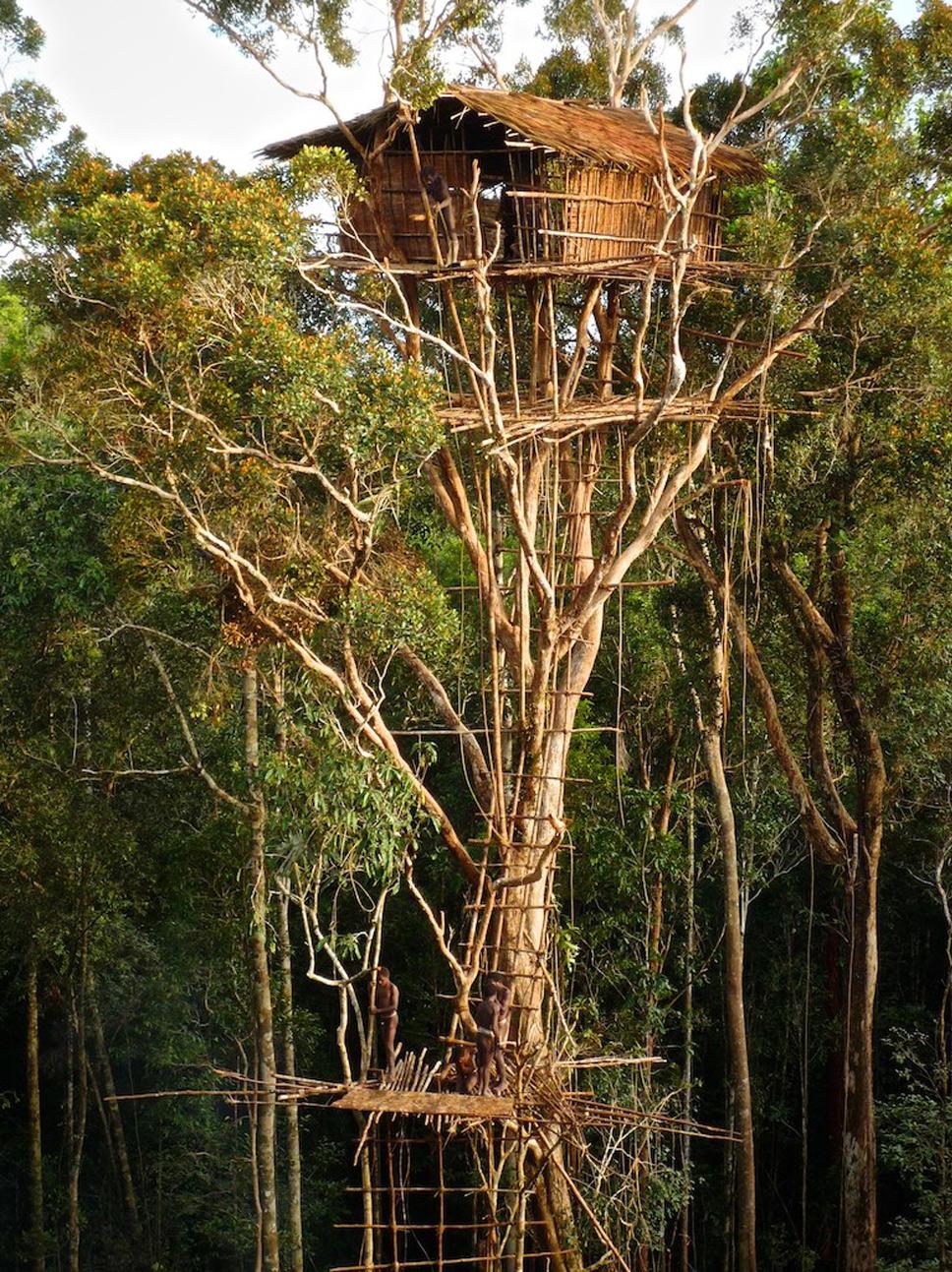treehouse17