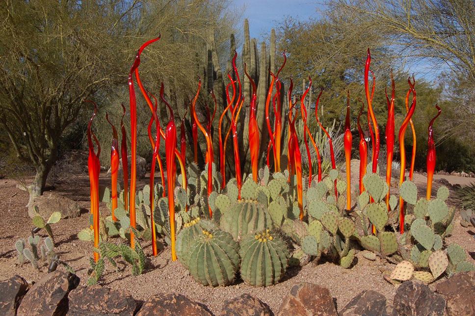 Desert-Botanical-Garden-Phoenix