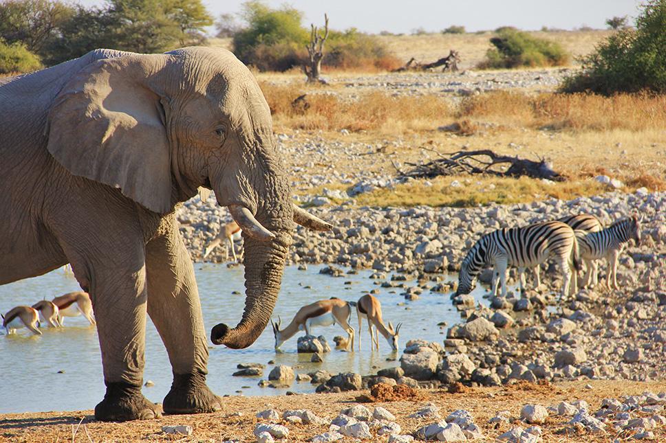 Parque-Nacional-Etosha-(Namíbia)---2