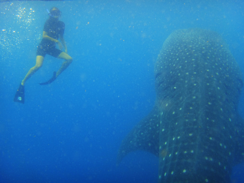 Tubarão-Baleia---México