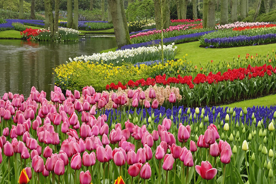 keukenhof-gardens-the-netherlands