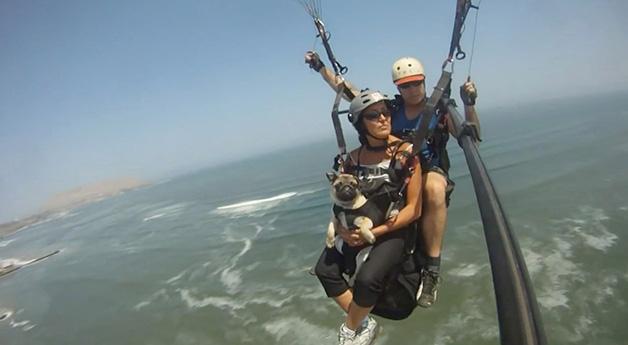 Paragliding Pug
