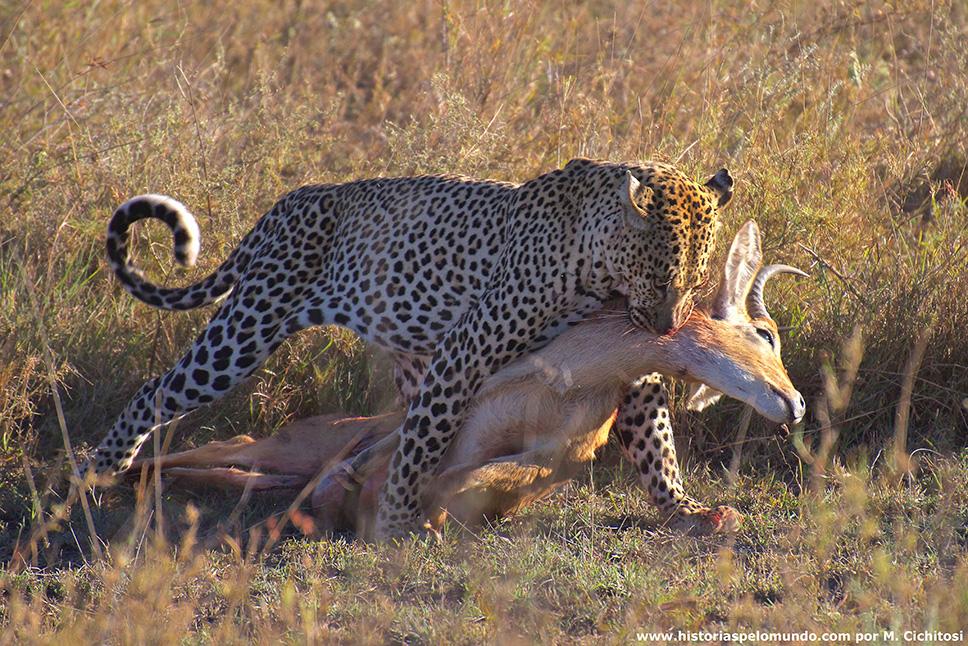 No-Serengueti---Tanzânia