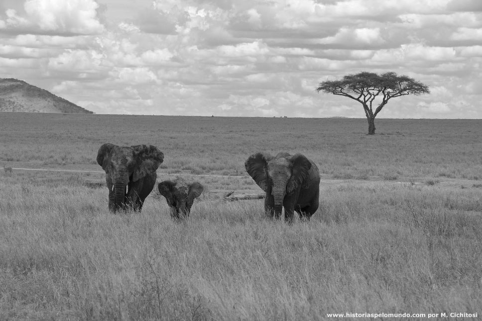No-Serengueti