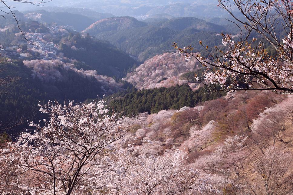 Yoshino2