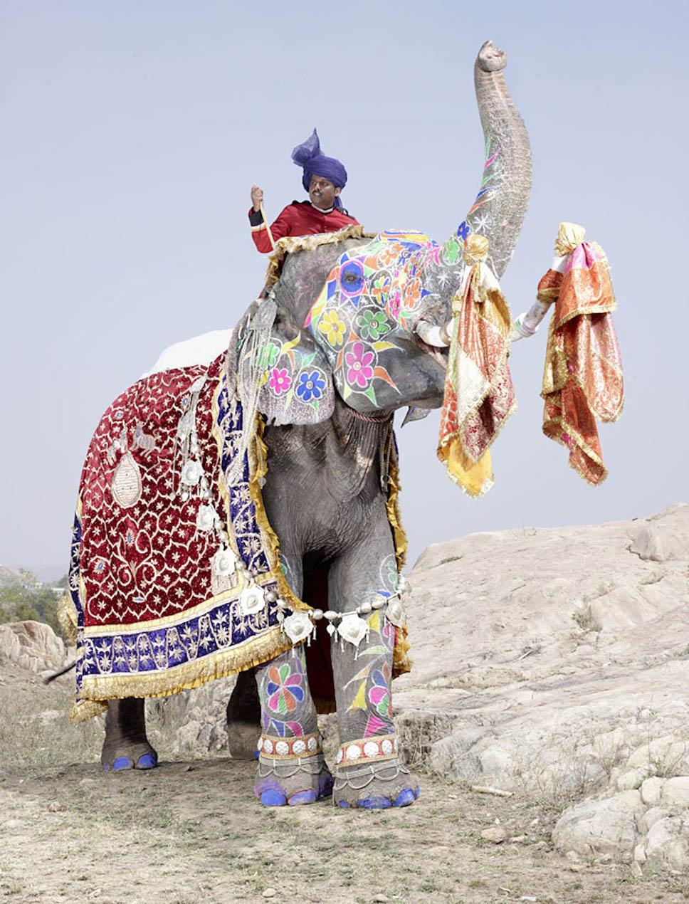 festival dos elefantes2
