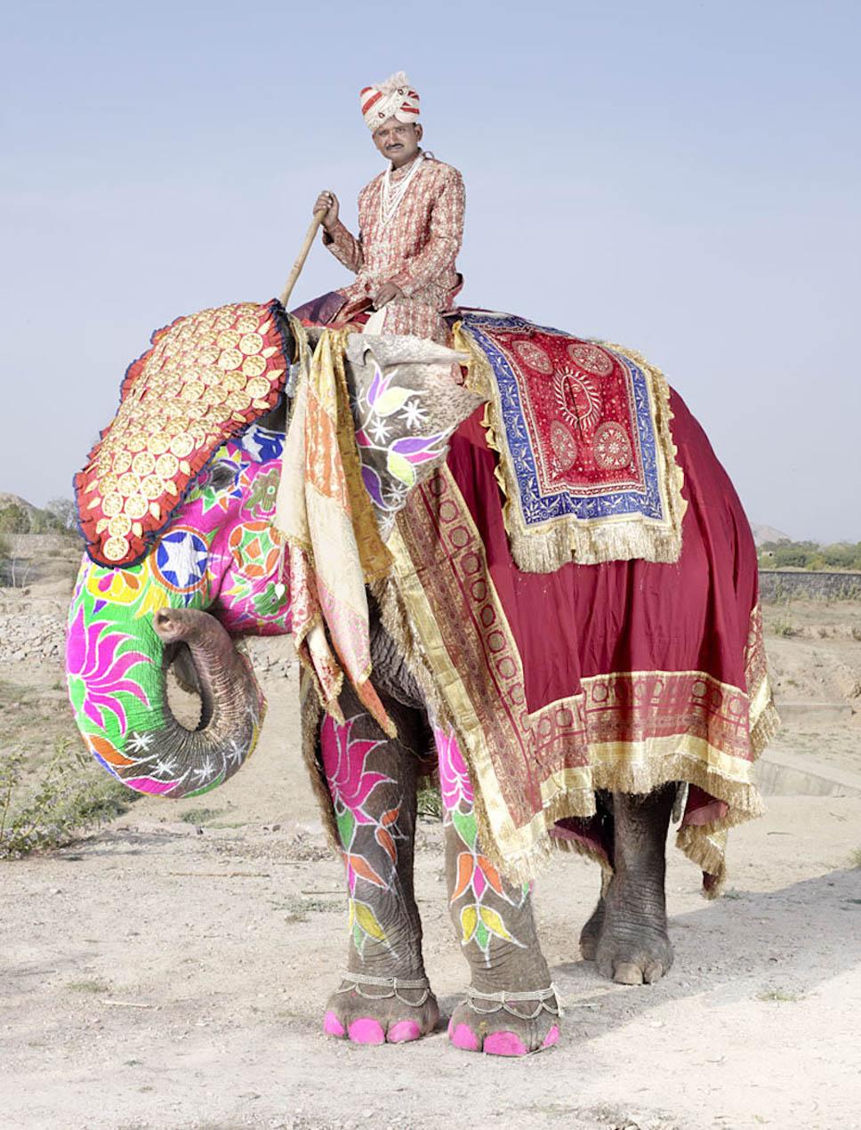 festival dos elefantes3