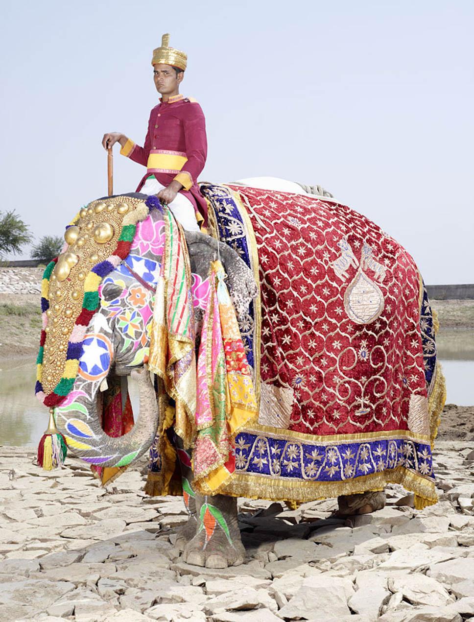 festival dos elefantes4