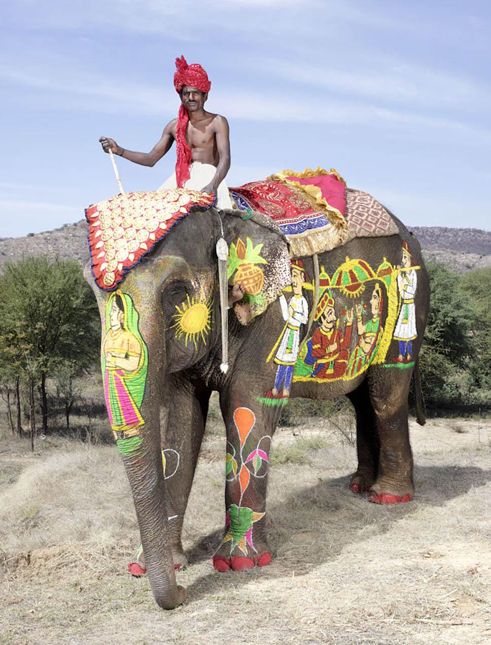festival dos elefantes5