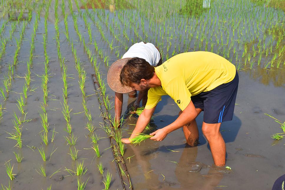 Plot-Indonesia-Plantando-arroz-em-Yogyakarta