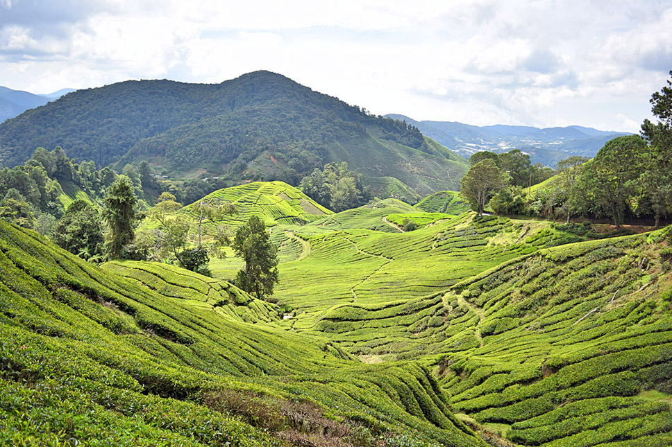 Plot-Malásia-Cameron-Highlands