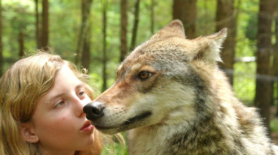 santuario-lobos9