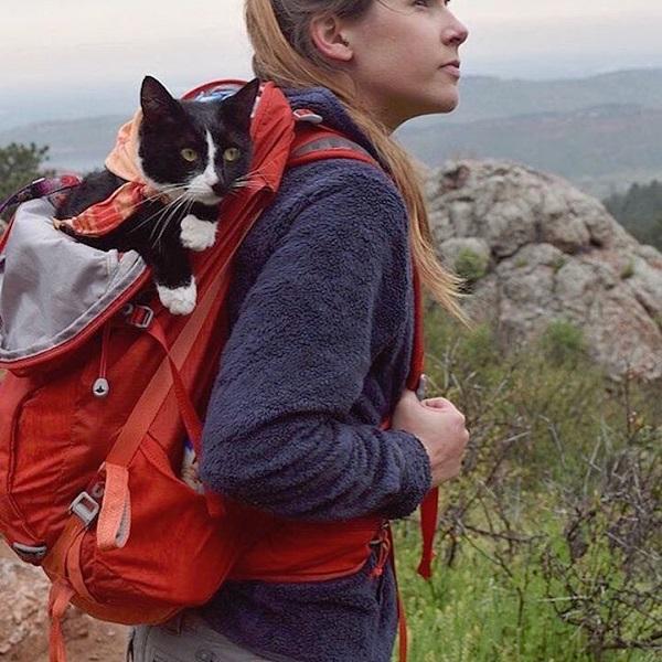 'Acampando com gatos' é a conta de Instagram do momento para os aventureiros de plantão