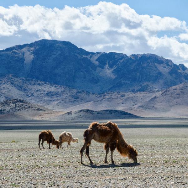 O Lonely Planet já divulgou sua lista de 'destinos tendência' para o ano que vem