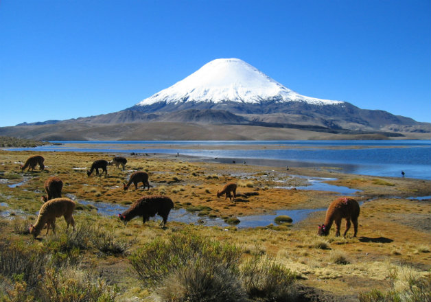 parinacota_volcano_chilewiki