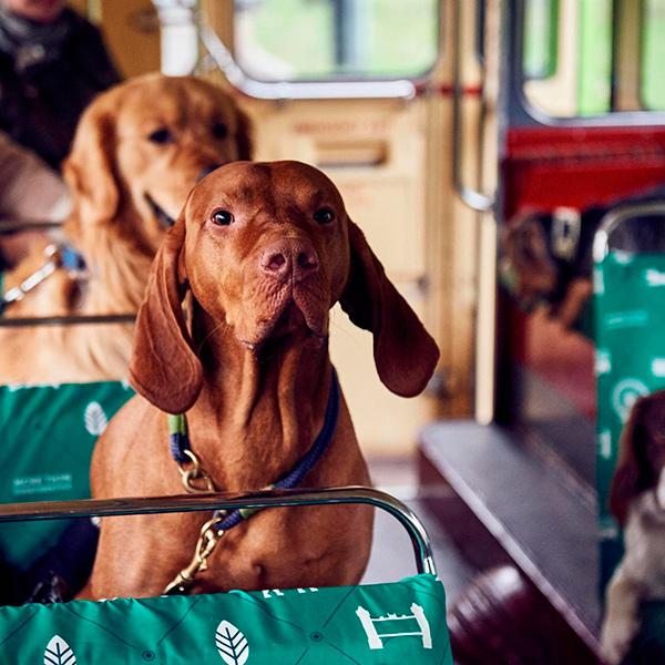 Londres lança ônibus turístico especialmente pensado para cachorros