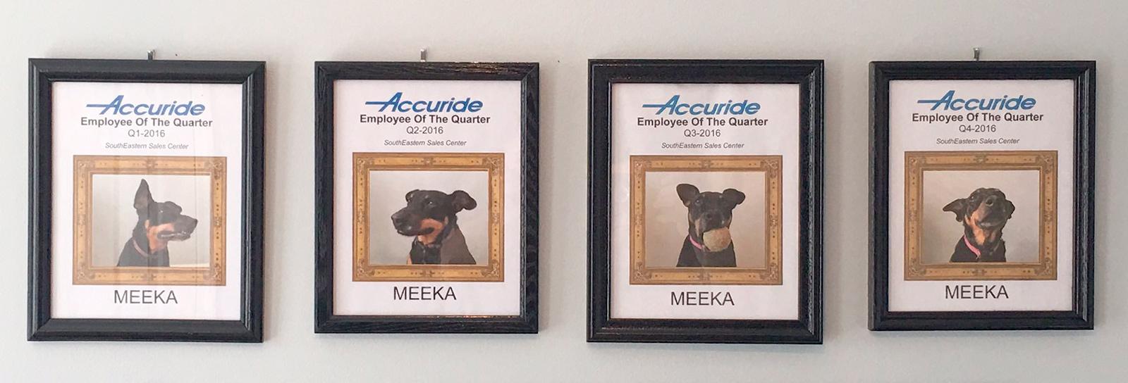 Ele faz home office e quis agradecer a companhia de sua cadelinha tornando-a funcionária do mês