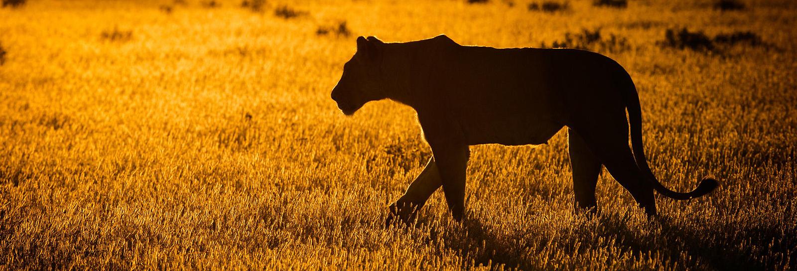 Fotógrafo usa o nascer e o pôr do sol para captar a vida selvagem no sul de África