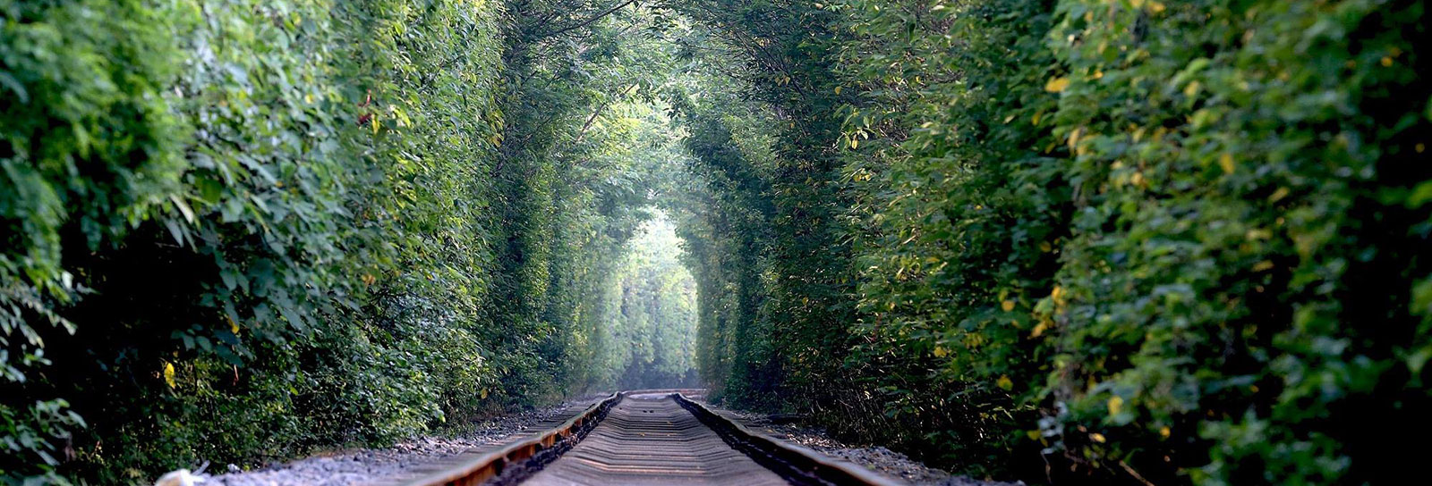 O verde e apaixonante 'túnel do amor' na China