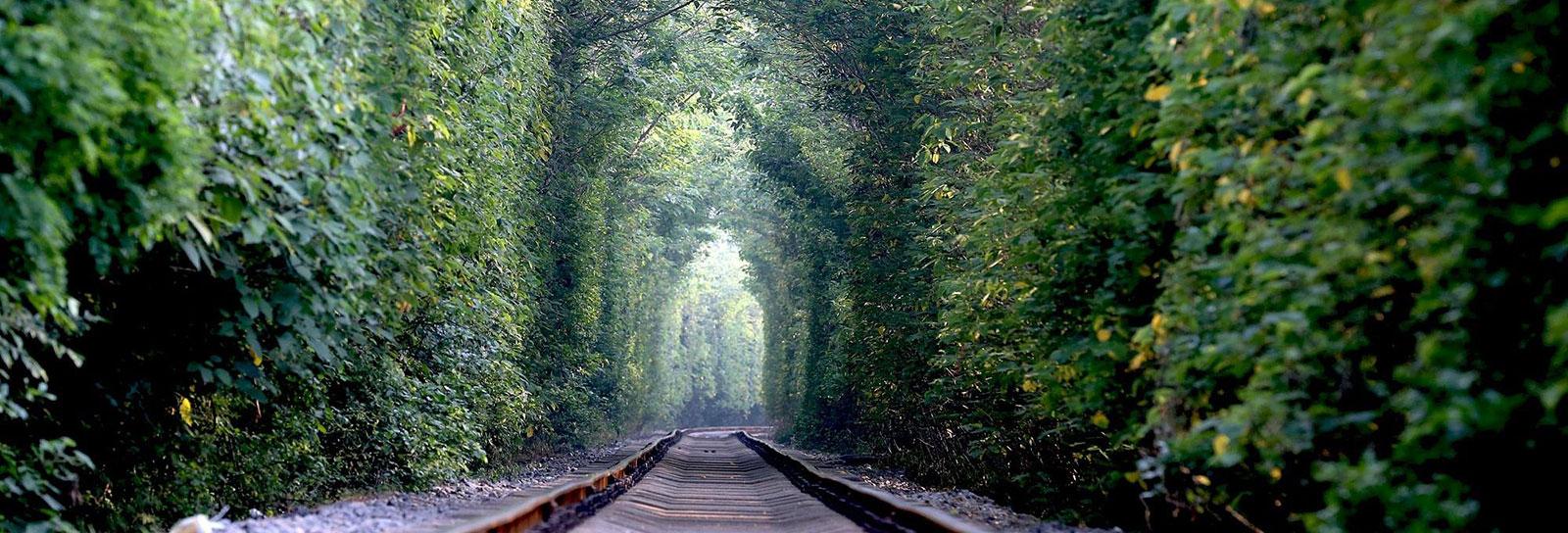 O verde e apaixonante 'túnel do amor' na China