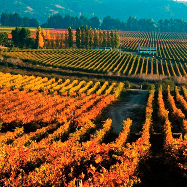 O Vale de Colchagua é destino obrigatório no Chile