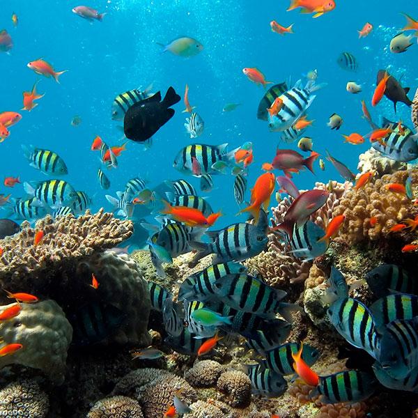 ONU tem bolsas para pesquisadores em Direito do Mar e Assuntos Oceânicos